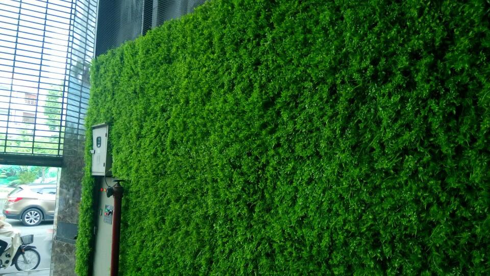 Thi công tường cỏ dương sĩ văn phòng công ty Vinamit Phú Nhuận